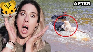 SWIMMING WITH TIGERS?! (ANIMAL FRIENDSHIPS)