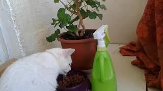 В каких условиях в квартире держать кота