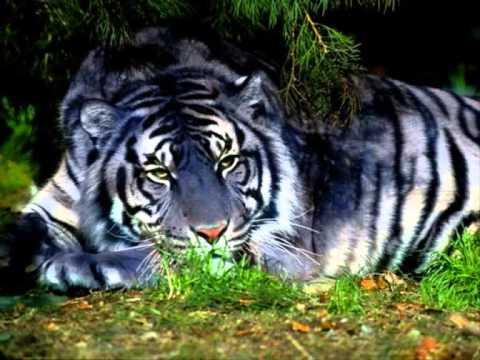 Tiger - Emeli SANDE