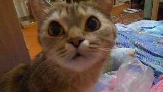 Кошка Ромашка просит её гладить!)))
