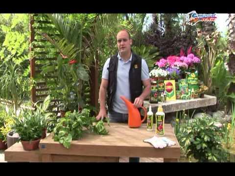 Cuidado de plantas interior compo comercial gal n - Cuidado de plantas de interior ...