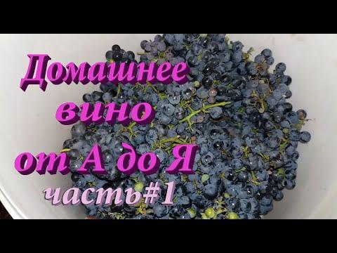 Вино из винного винограда в домашних условиях