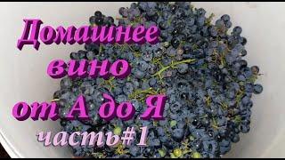 Как сделать домашнее вино из винного винограда от А до Я!