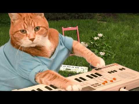 Keyboard Cat I LIKE SUMMERTIME!