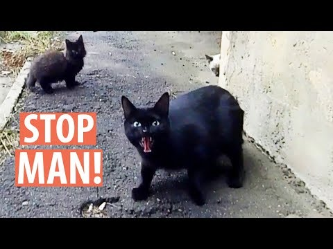 Stray Mother Cat with 4 Kittens Hissing at Me