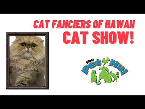 Cat Fanciers of Hawaii: Cat Show 2020