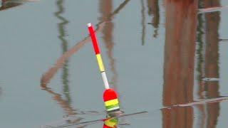 Рыбалка Карась клюет в дождь Ловля на поплавок весной в апреле My fishing