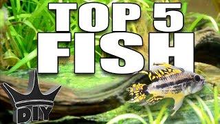 HER TOP 5 Aquarium fish!!!