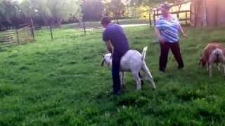 Zavery riding da goat!