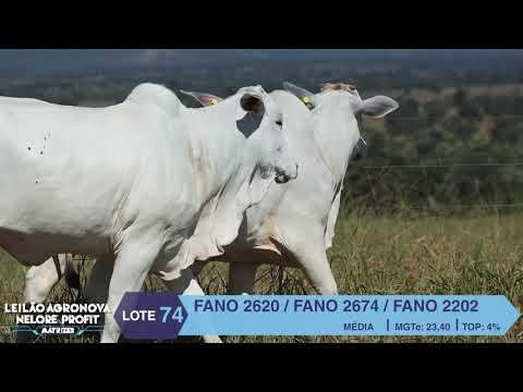 LOTE 74 FANO 2620 X 2674 X 2202