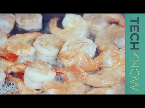 Unsafe shrimp and the question of seafood farming - TechKnow