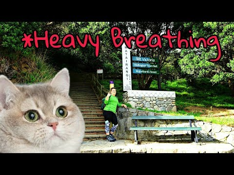 Hiking Mt. Victoria, Wellington! | New Zealand Travel Vlog #2