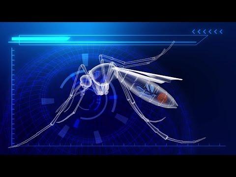 Florida releases 20,000 bacteria-infected mosquitoes to combat Zika