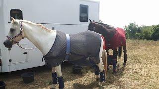 Départ des chevaux pour St Gildas de Rhuys