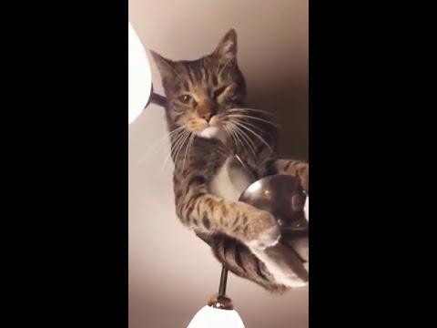 Бедный кот обустраивает гнездо