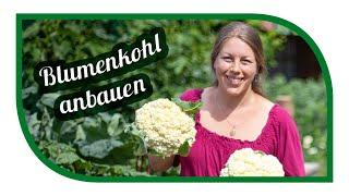 Blumenkohl erfolgreich anbauen 👩🏼🌾 Aussaat im Januar ernte im Juni 🌱 Neckarperle