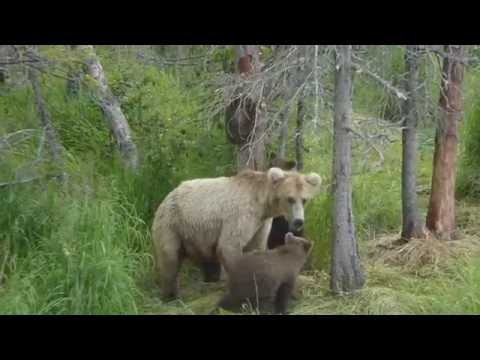 When Mother Bears Collide