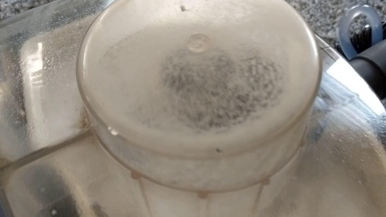 Nasssauger Von Dm Von Sapur Teppich Reinigung 30 01 18 Youtube