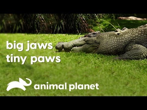 Fierce Jaws And Cuddly Paws Of The Australia Zoo   Wild Times   Animal Planet India
