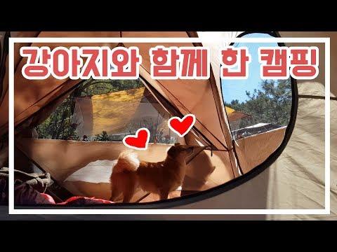 [애견동반 캠핑/Camping with dogs] 초가을, 헐크토르와 함께 한 2박 캠핑