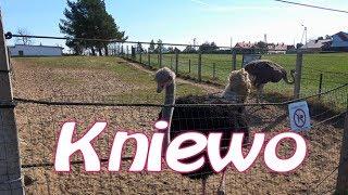 Kniewo - Strusia farma 4k / Kniewo - Ostrich Farm 4K