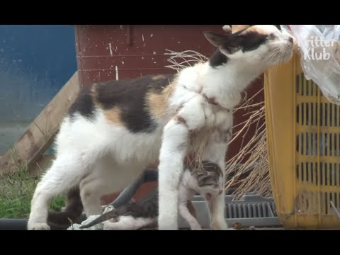 Kitten Dangles From Fishing Net On Mother's Neck | Animal In Crisis EP31