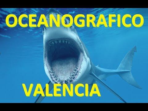 Oceanografico oceanografic valencia youtube for Oceanografico valencia