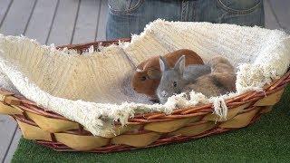 Naturalna karma dla królików i świnek morskich