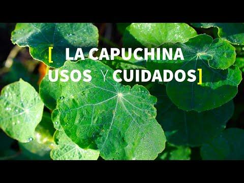 La Capuchina en huerta ecológica, ASOCIACIONES, CUIDADOS, CLIMAS [TUTORIAL de usos en PERMACULTURA]