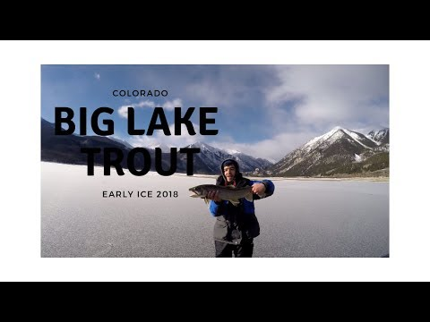 Big Lake Trout Through Clear Ice - Colorado