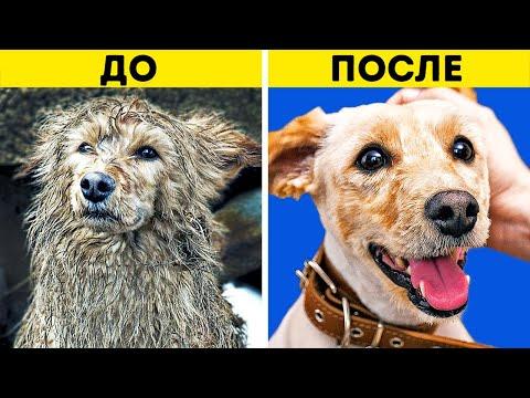 Вопрос: Люди которые любят животных, всегда ли добры и сострадательны к людям?
