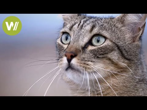 A cat discovers wild animals living in cities (Documentary of 2014)