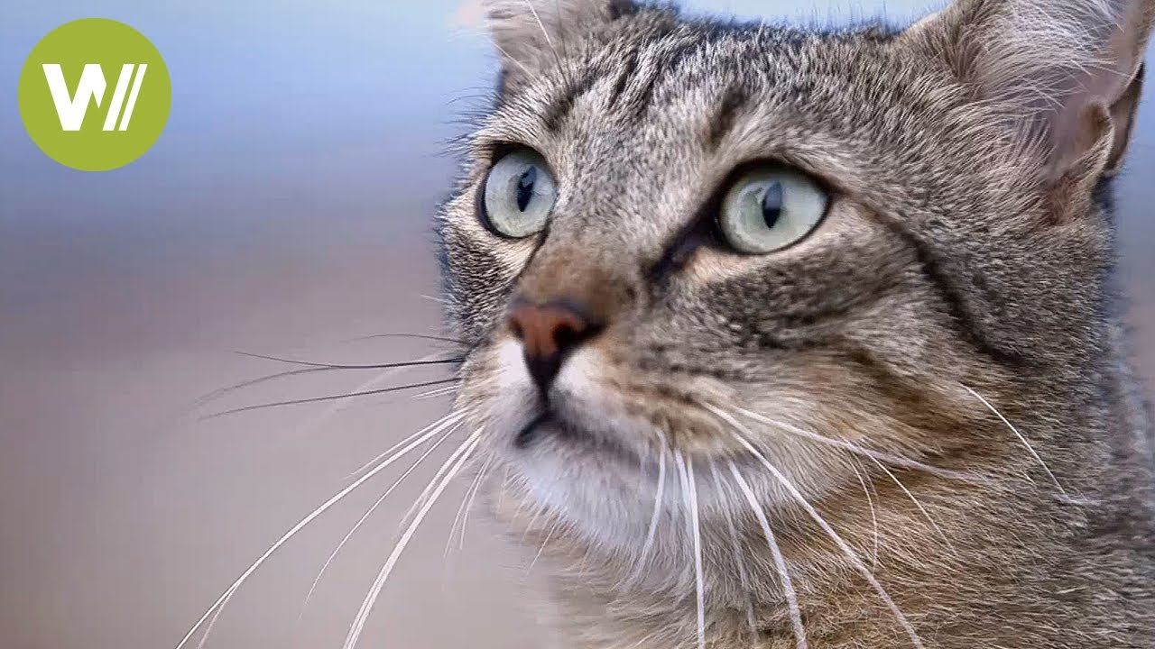 A day in the life of a cat | Animal documentary with English subtitles, 2014