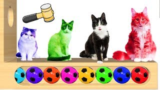 Learn Colors with Cat Xylophone Funny Animals | Colors Videos for Children, Toddlers and Kids