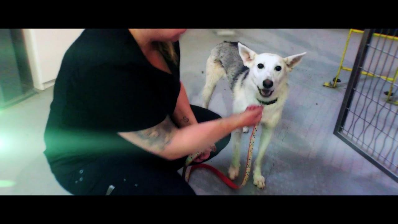 Inside Look at AARCS' Animal Shelter!