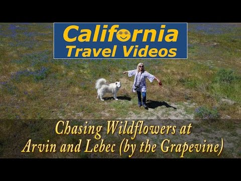 cTv RV Life - Drone hunting Wildflowers at Arvin and Lebec, California