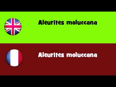 FROM ENGLISH TO FRENCH = Aleurites moluccana
