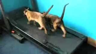 Supercats Episode 1 —andnbsp;The Funniest Cat Video!.mp4