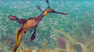 Sea Forests: 10 Hours of Relaxing Oceanscapes   BBC Earth thumbnail