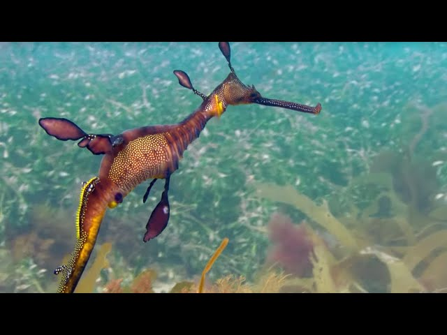 Sea Forests: 10 Hours of Relaxing Oceanscapes | BBC Earth