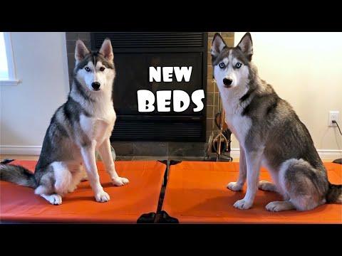 Huskies Testing VEEHOO Dog Beds