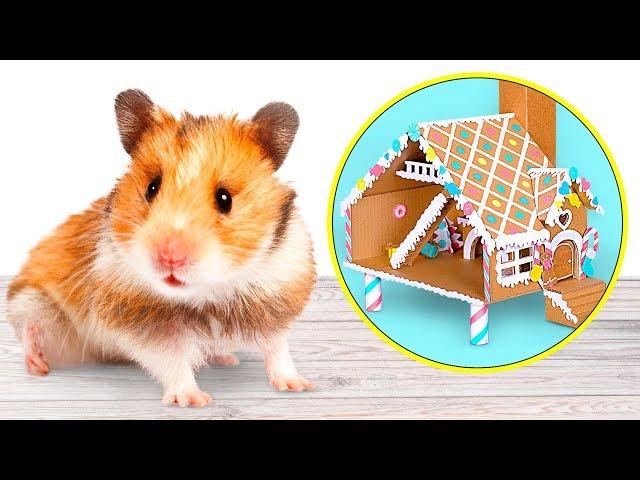 DIY Casa de Biscoito de Gengibre para Hamster| Um Artesanato de Papelão