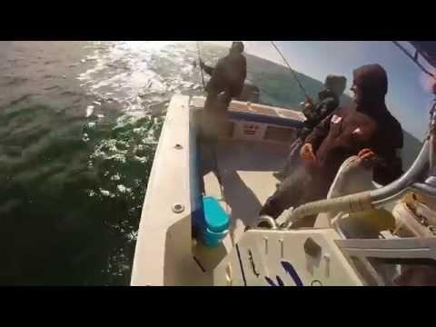 Pêche au leurre...