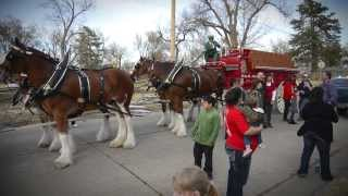 Budweiser Clydesdales Home Delivery Sweepstakes