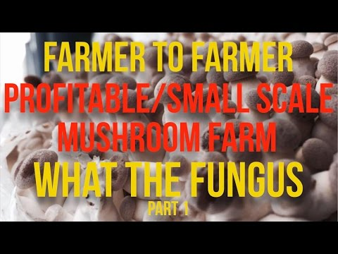 Interviews & Insights - What The Fungus - PART 1