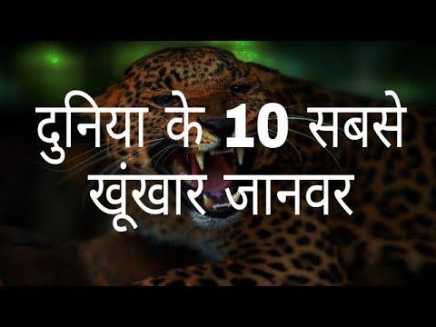 दुनिया के 10 सबसे खूंखार जानवर | The world's 10 most dreaded animals | Hindi Education.