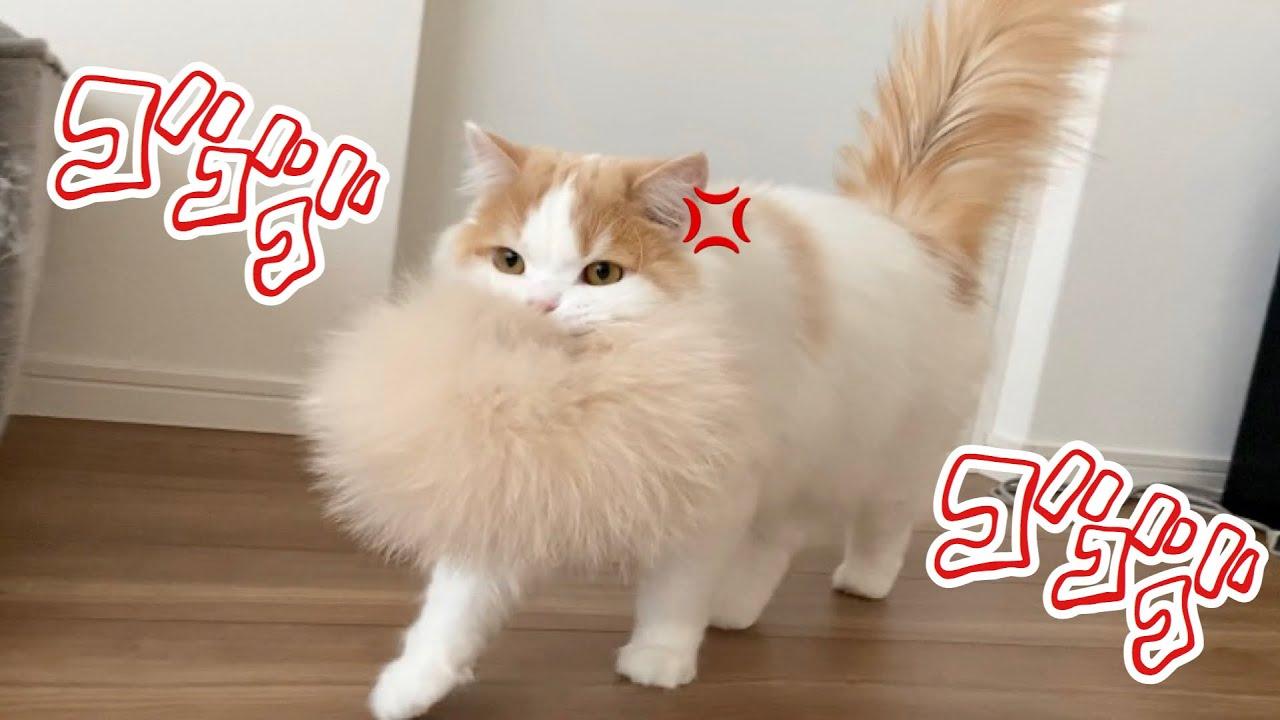 猫 しっぽ ぶんぶん