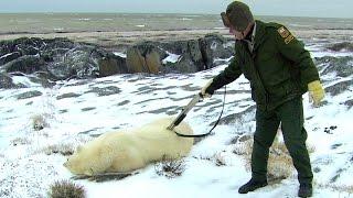 Risk Takers - 114 - Polar Bear Alert Agent