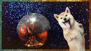 Funny  DOGS  DANCING! (TRY Not to  LAUGH)