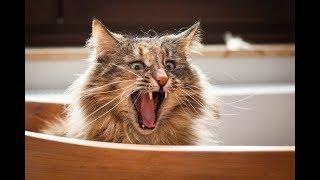 Смешные котики собачки и другие животные!!!